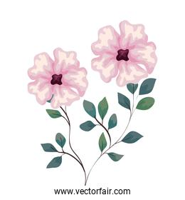 flowers pink color with branches and leaves, on white background