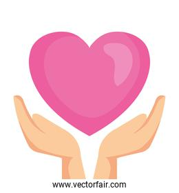 hands holding heart on white background