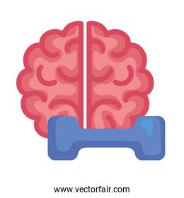 brain exercise, brain with dumbbell, on white background