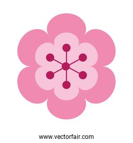 beautiful flower nature isolated icon
