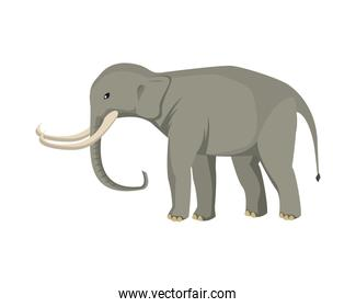 wild elephant animal nature icon