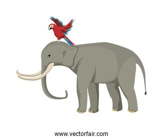 wild elephant and macaw animals nature