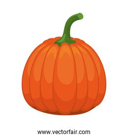pumpkin healthy vegetable isolated style icon