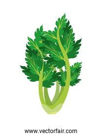 celery healthy vegetable isolated style icon