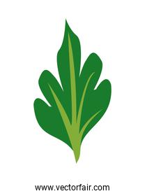 spinach healthy vegetable isolated style icon