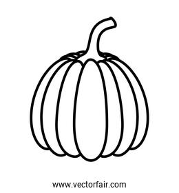 pumpkin healthy vegetable isolated style design