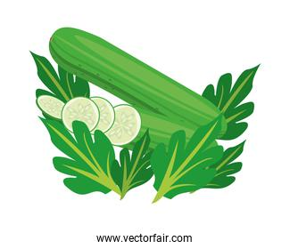 cucumber healthy vegetable detailed style icon
