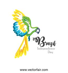 Brazil independence day with parrot