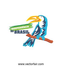 brazil independence day with toucan