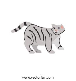 cute domestic cat on white background