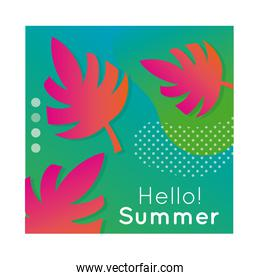 hello summer colorful banner with leaf plant