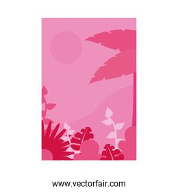 Summer pink banner with palm tree and leaves vector design