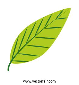 tropical leaf flat style icon vector design