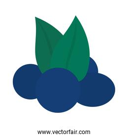 blueberries fruits icon, flat style