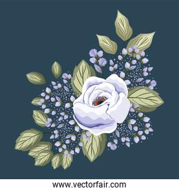 white rose flower with leaves painting vector design