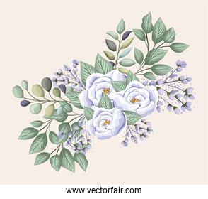 white rose flowers with leaves painting vector design