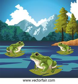 frogs animals in the lake landscape scene
