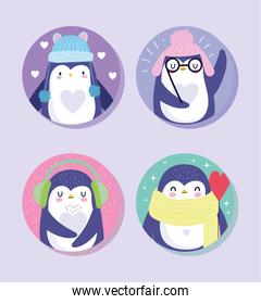 penguins bird animal cartoon wildlife with warm hats scarf glasses characters