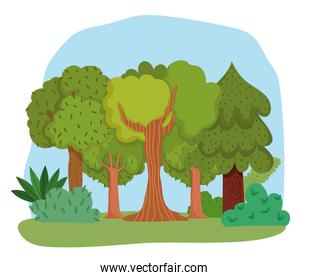 forest trees bushes grass leaves foliage greenery scene