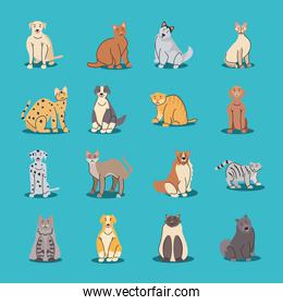 set of pets, different breeds of dogs and cats