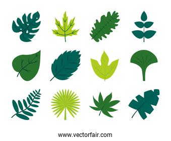 tropical leaves flat style icon set vector design