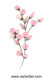 pink buds flowers bouquet painting vector design