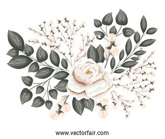 white rose flower with buds and leaves painting vector design