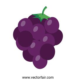 fresh grapes fruits, in white background