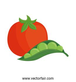 fresh tomato with pod pea plant in white background