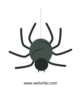 happy halloween, hanging black spider trick or treat party celebration flat icon design