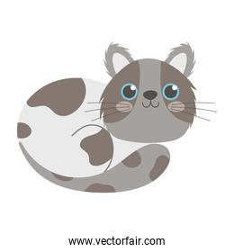 spotted cute gray cat cartoon isolated white background design
