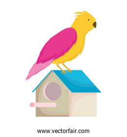 pet shop bird in the house cartoon isolated white background design