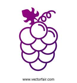 grapes fresh fruits gradient style icon