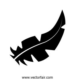 feather icon image, silhouette style