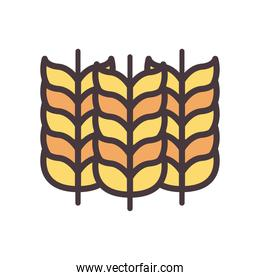 wheat ears line and fill style icon vector design