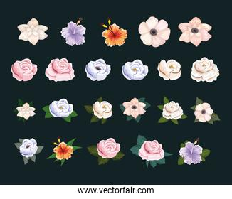 set of flowers with leaves painting vector design