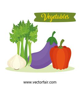 banner with vegetables, eggplant, celery, garlic and pepper