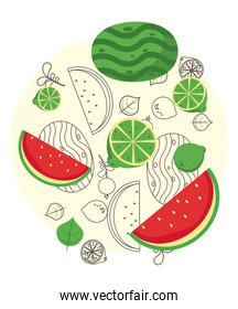 fresh local fruits with watermelon in white background