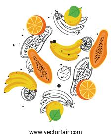 fresh local fruits with bananas and papayas in white background
