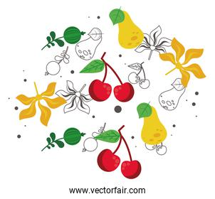 fresh local fruits with pears and cherries in white background