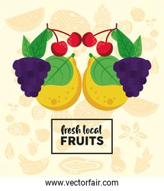 fresh local fruits lettering with grapes and fruits