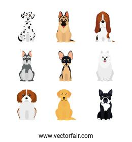 cartoon dalmatian dog and dogs icon set, flat style