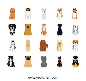 cartoon cocker spaniel and dogs icon set, flat style