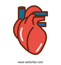 human body heart veins anatomy organ health line and fill icon