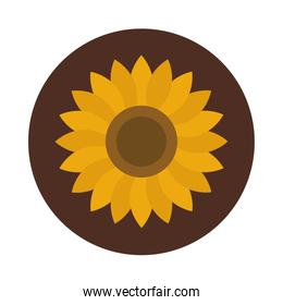 sunflower petals decoration nature block and flat icon