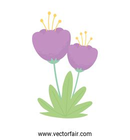 purple flowers stem grass nature isolated white background design