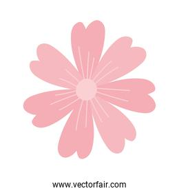 flower pink petals decoration isolated white background design