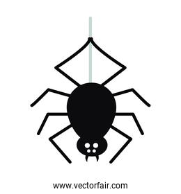 halloween spider icon, flat style