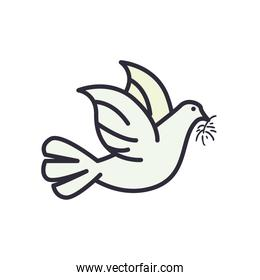 dove line and fill style icon vector design