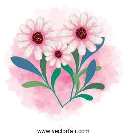 cute flowers color pink with branches and leaves